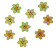 Blumen bunt mit Glitzerstein