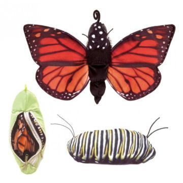 Schmetterling-Raupe-Wendepuppe